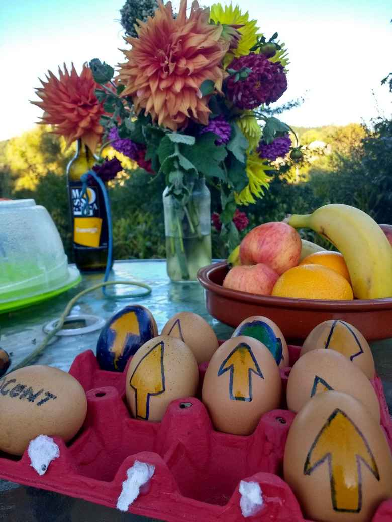 A trail angel left these eggs and fruit for hungry pilgrims along the Camino de Santiago.