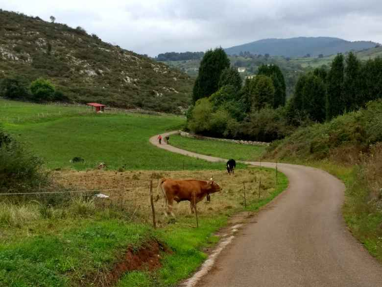 A cow greeted two cyclists on electric mountain bikes along the Camino Primitivo northwest of Escamplero, Spain.