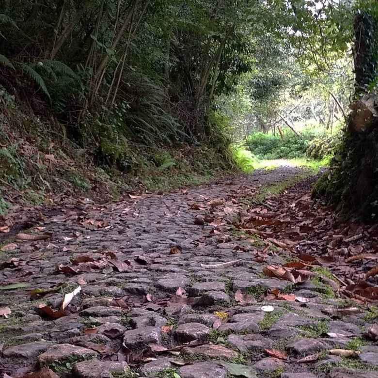 Cobblestones leading toward a tunnel of trees along the Camino Primitivo near Valduno, Spain.
