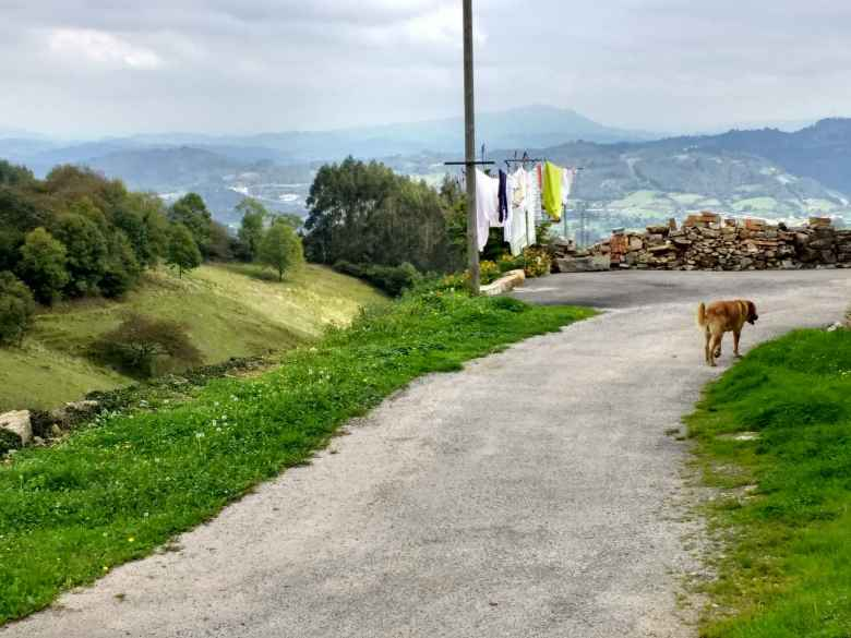 A dog walking by laundry near Fuejo, Spain.