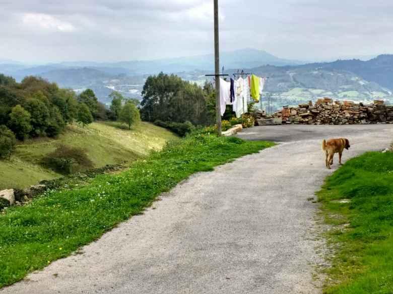 A dog walking by laundry near Fuejo, Spain.