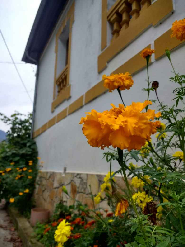 Orange flowers by a nice Spanish home in Llamas, Spain.