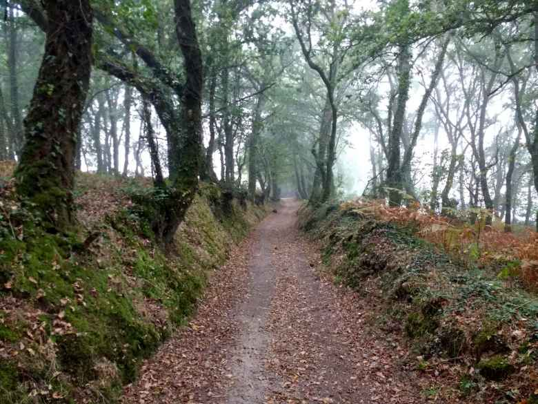 The Camino Primitivo with fallen leaves near Bacurín, Spain.