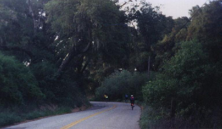 green trees, early miles of 1999 Central Coast Double Century.