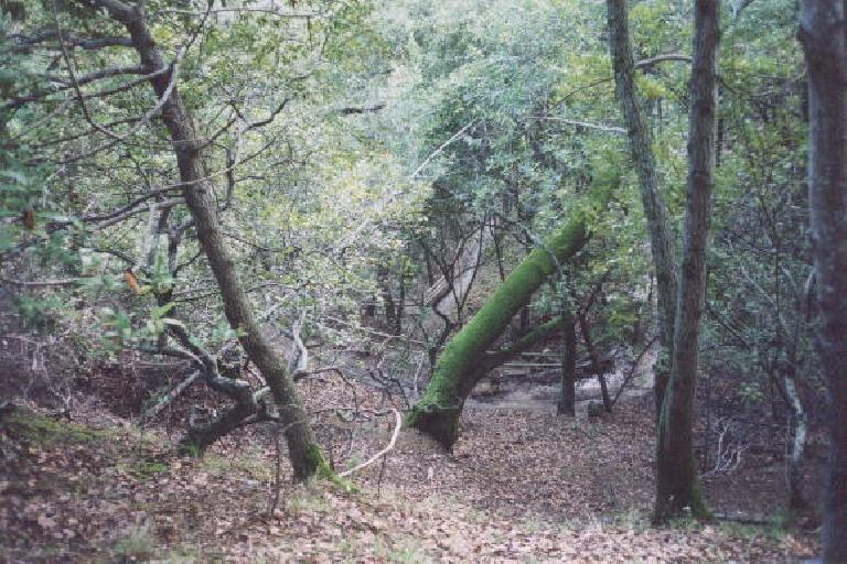 Down below the Bay View trail were funky switchbacks that would take us back to the end of our hike. (December 24, 2001)