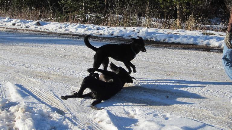 Oso and Danny skirmishing.