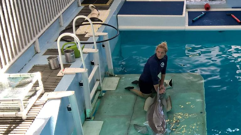 A dolphin handler performing physical therapy with Winter the dolphin.