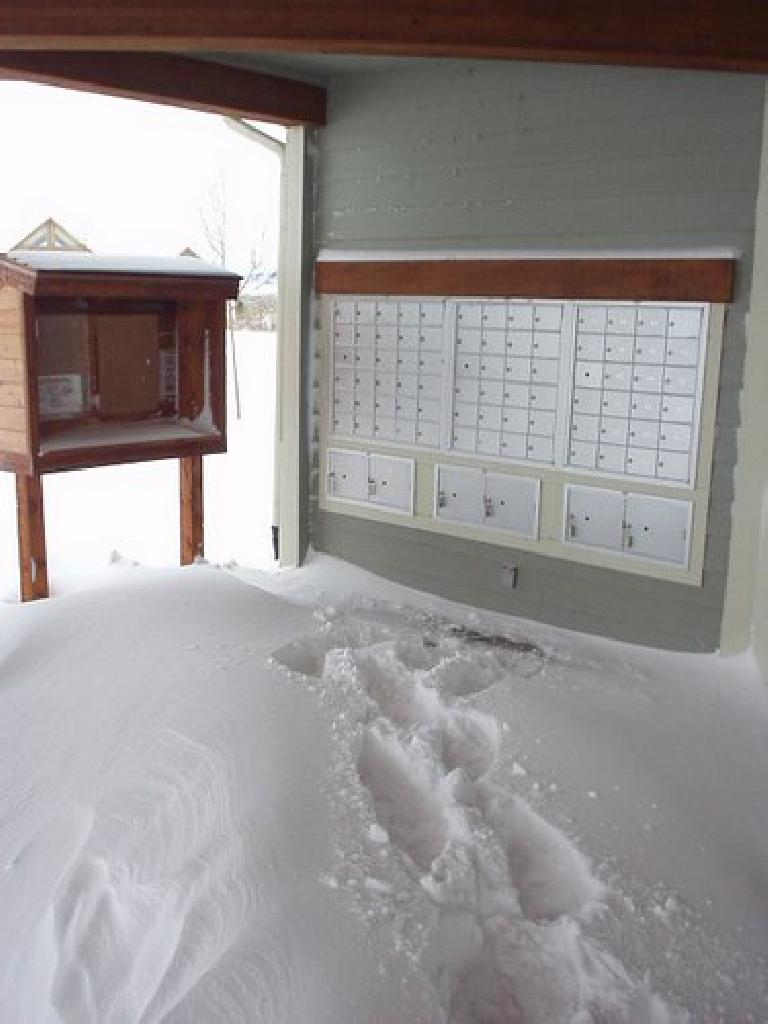 Looking for any excuse to go outside, I went to pick up my mail.  Too bad USPS mail deliveries were canceled during the blizzard!