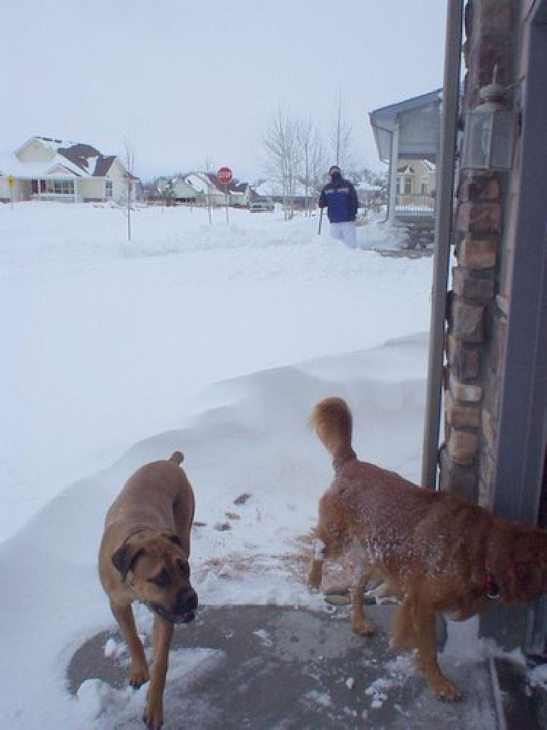 The neighbors' dogs were rather curious (even running around in my garage) as Dick looked on.
