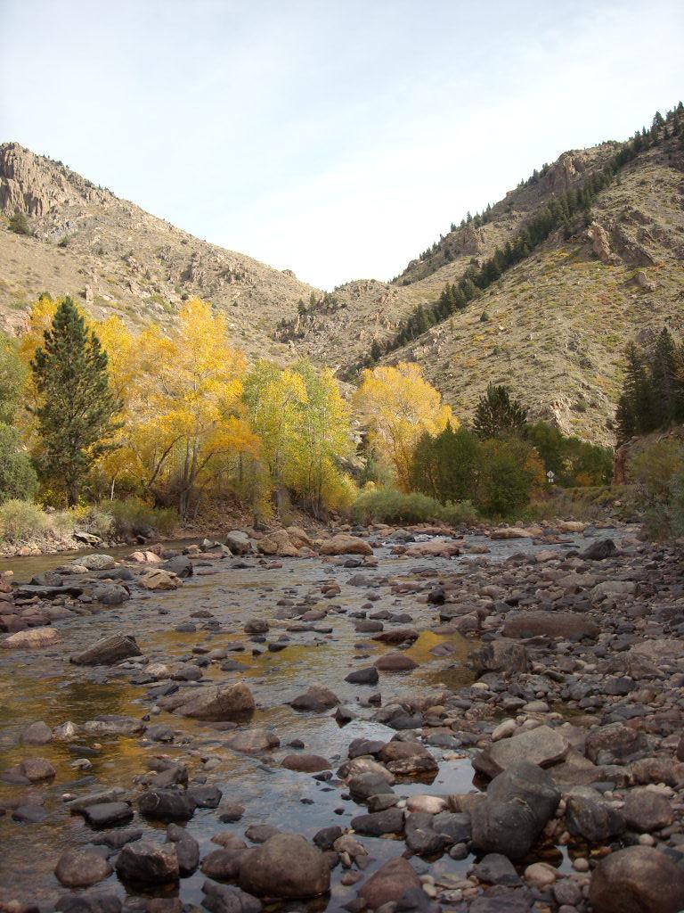 Fall colors on the Poudre River.