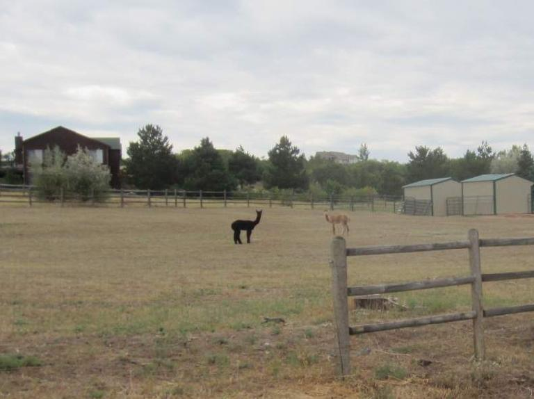 [Day 2, Mile 18, 9:42a] Llama. (August 24, 2012)