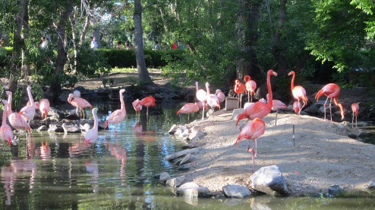 Flamingos at the Denver Zoo.