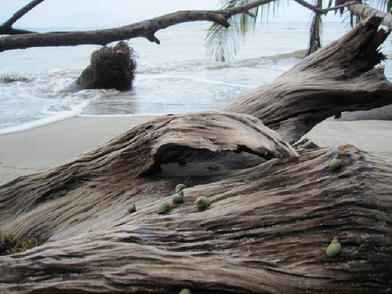 Parque Nacional Cahuita. Photo: Tori. (March 21, 2011)