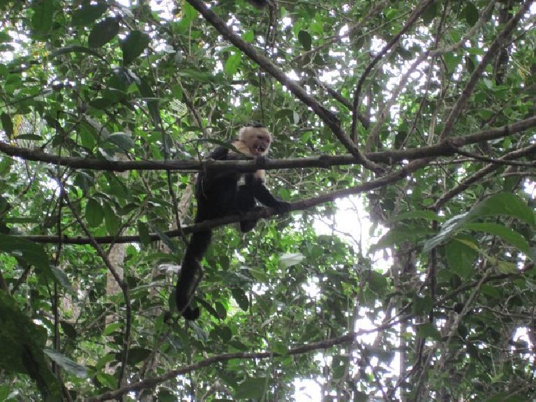 Monkey at Parque Nacional Cahuita. Photo: Tori. (March 21, 2011)