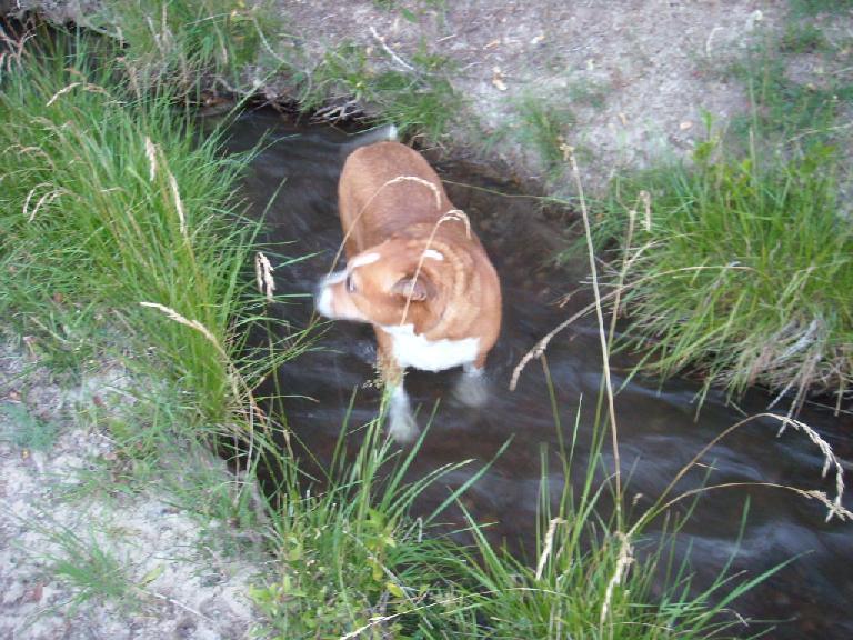 Gidget in a ditch.