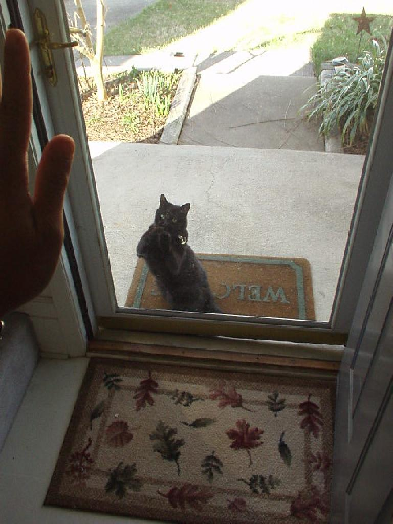 No I was not torturing Sam and Chrissy's cat.  Never mind I can't even remember his or her name (Xanga?)