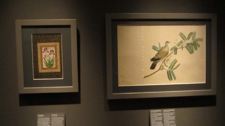 Paintings of flowers and a bird.