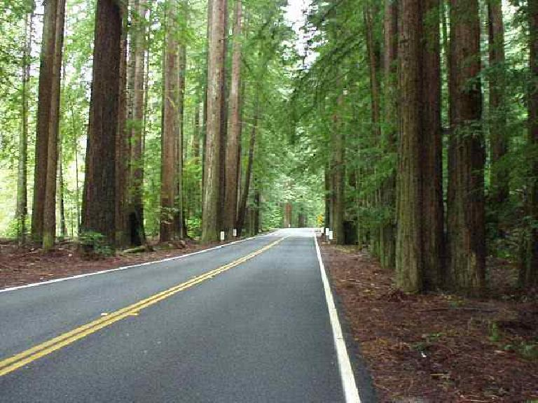 Mile 184, 8:52am: Nearing the turnaround point at the Paul Dimmick Campground, I rode through a section lined with redwood trees.