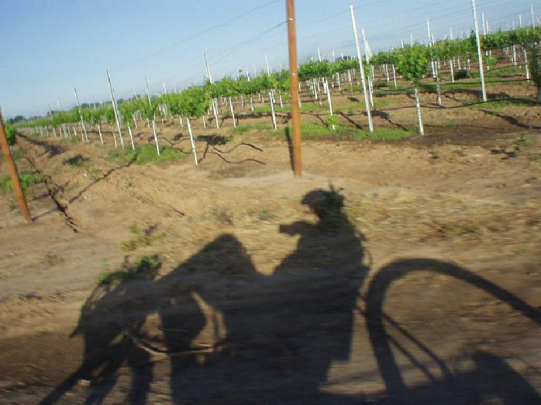 [Mile 9, 7:35 a.m.] My recumbent's shadow while passing by the numerous vineyards.