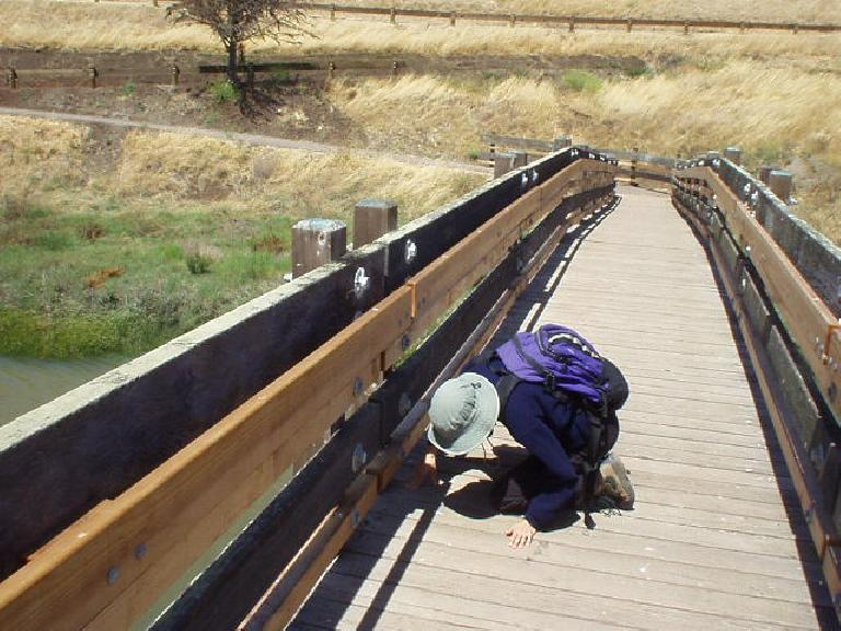 This would be the last hike with Sarah. before she moved to Michigan.  Ever the bird-lover, here she is inspecting a nest underneath the bridge.