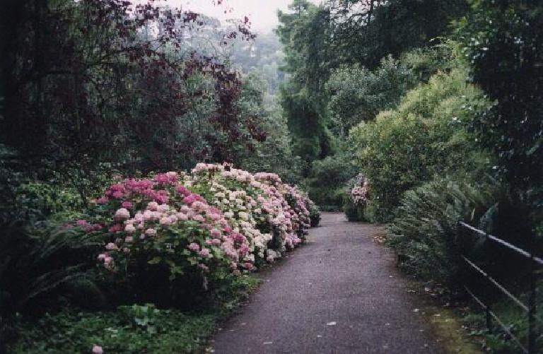 Flowers at Dunster Castle. (August 15, 2000)