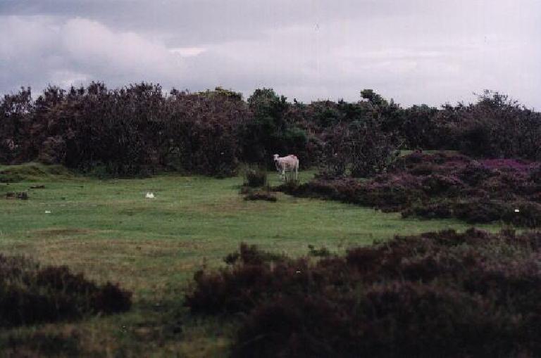 Lamb. (August 15, 2000)