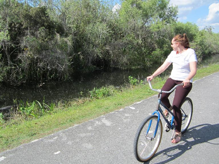 Kelly spots an alligator while going cycling from the Shark Valley Visitor Center. (February 9, 2013)