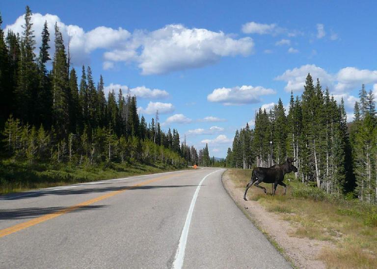 [Mile 129, 4:08 p.m.] Moose.