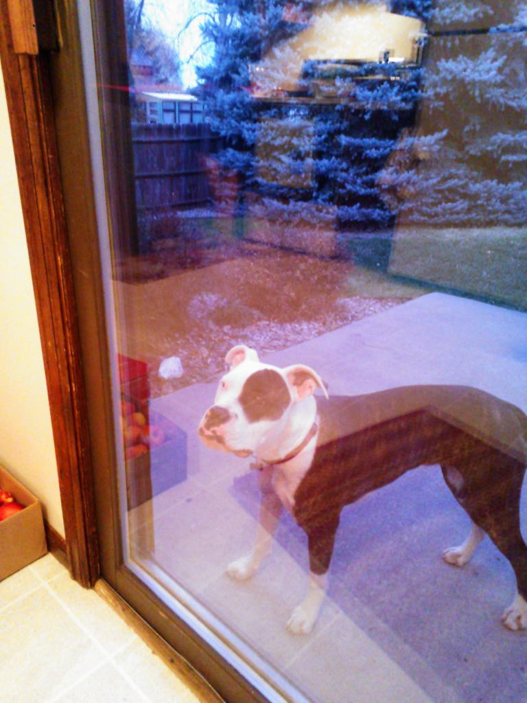 """Let me in!"" says Ramsey. (November 18, 2012)"