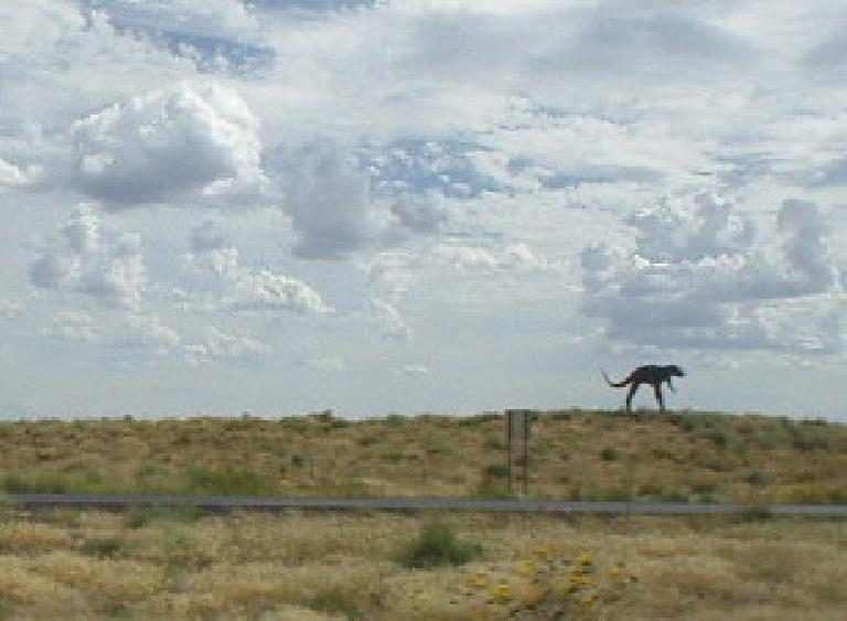 In Arizona, I also spotted... dinosaurs.  Ok, so this one is fake -- there were quite a few by I-40.