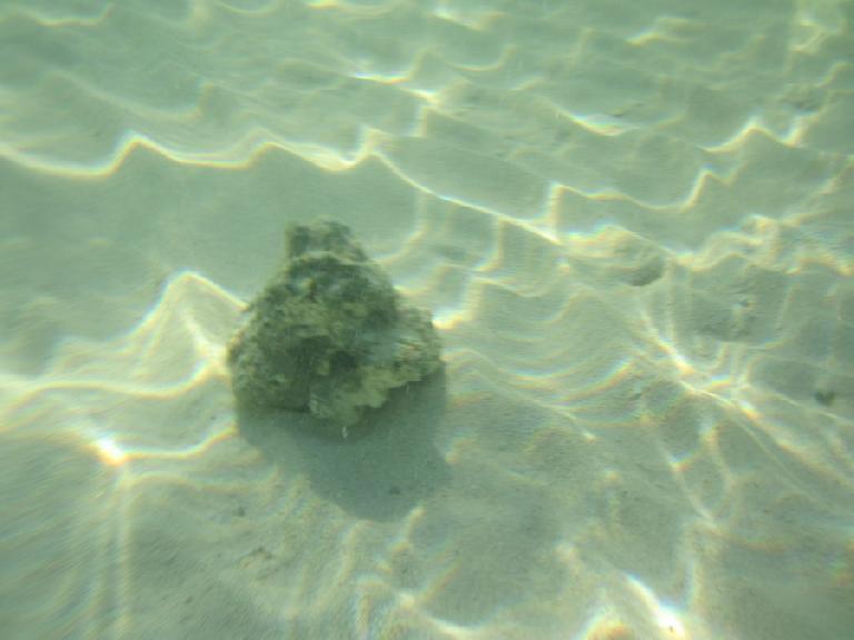 Coral rock.