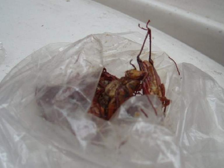 Chapulines (fried grasshoppers) are popular in Oaxaca.  I tried one; it was crunchy and not bad.