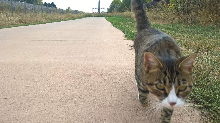 A cat walking along the Power Trail in Fort Collins.