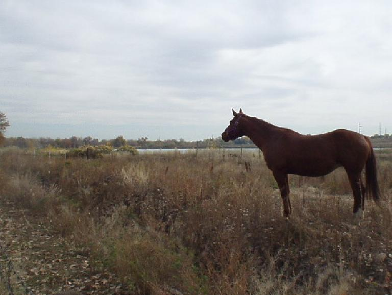 A horse looks on with a creek in the background just 2 miles from downtown.