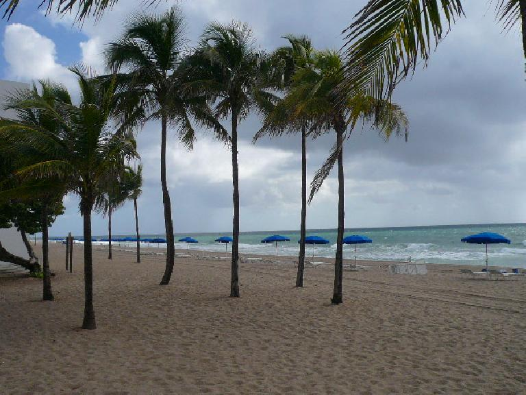 Palm trees and umbrellas among the sand.