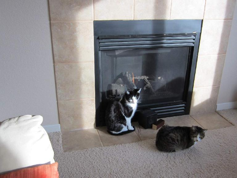 The furnace broke! Fortunately the gas fireplace still worked so the kitties didn't freeze during the weekend.