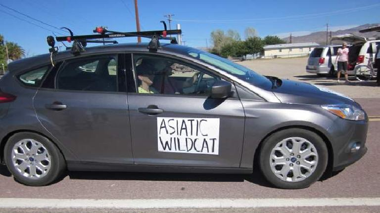 (Mile 417) Spotted: the Asiatic Wildcat Crew Goddesses in the most eco-friendly crew vehicle of the race. (2011-10-09; Photo: AdventureCorps)