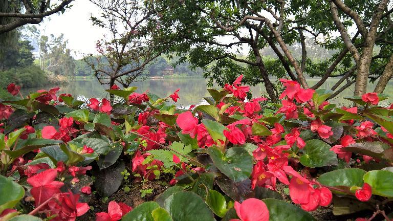 Flowers at Zuohai Park in Fuzhou, China. (April 17, 2016)
