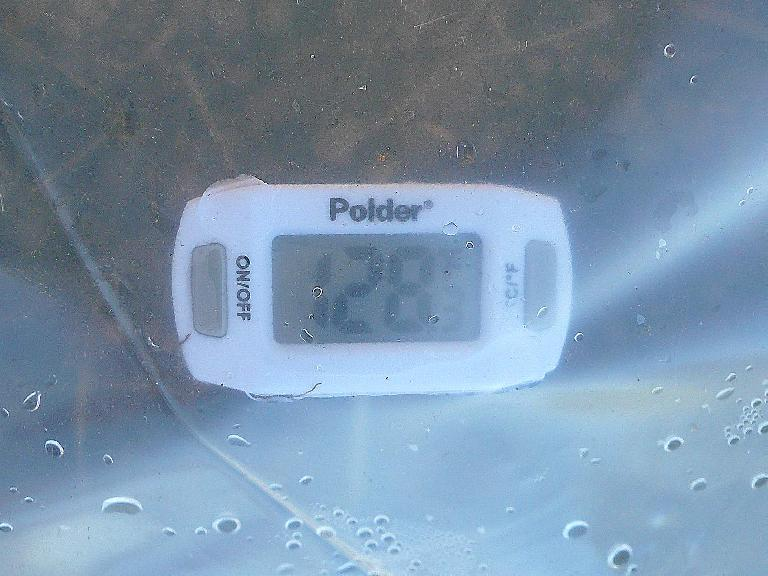 The temperatures in the garden plot reached 128 degrees on a 94-degree day.  That should be enough to roast those weed seeds.