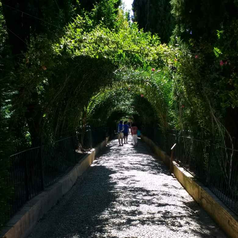 Vegetation forming an arched passageway at Generalife.