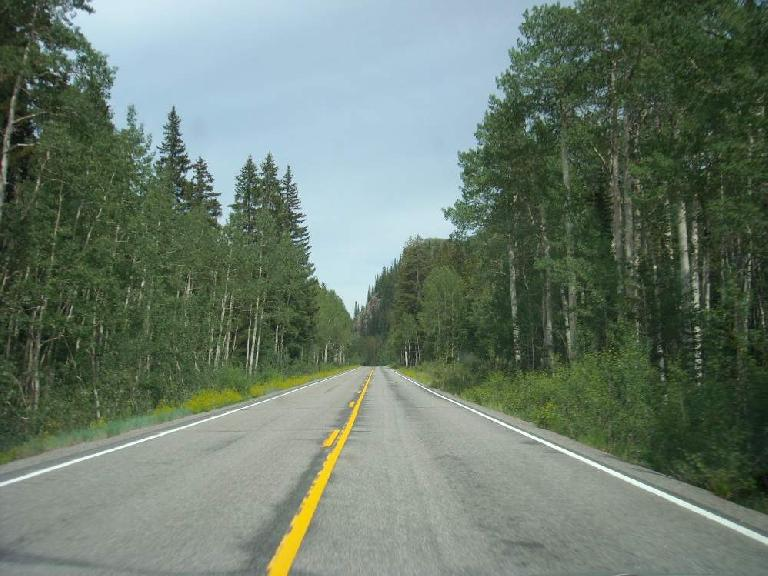 The drive to the race: Highway 65 near Grand Mesa is lined with aspen, making a lovely drive. (July 23, 2010)