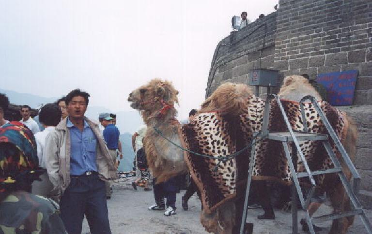 "Those who made it to the top had the privilege of buying a ""I climbed the Great Wall"" certificate or... have a picture taken with a camel."
