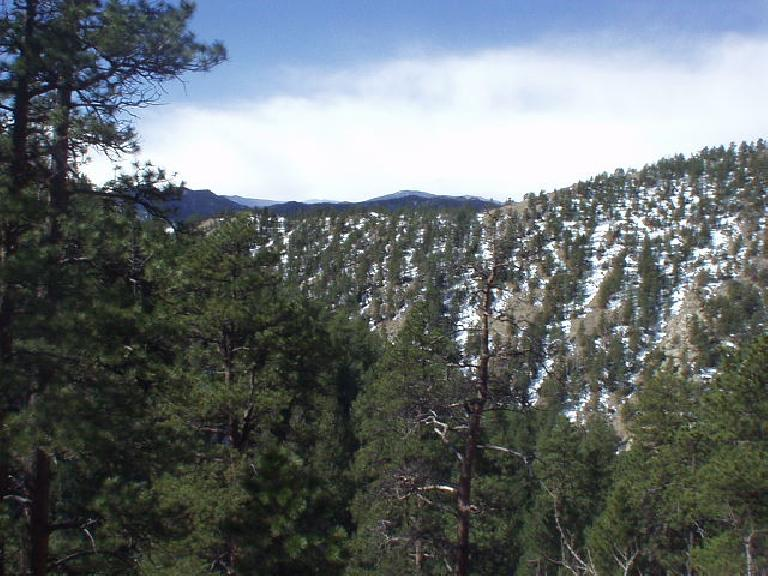 The Poudre Canyon was wonderfully treed with interspersed snow.