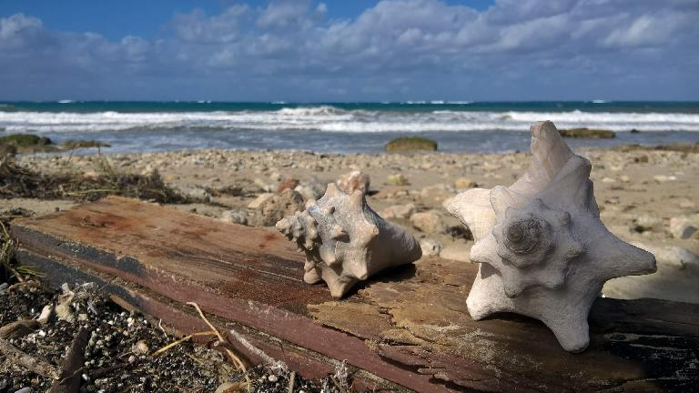 More sea shells in Guanabo, Cuba.