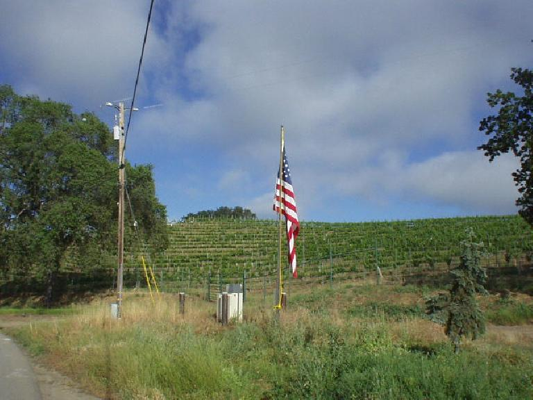 [Mile 9, 8:25am] On Sunday, Bob, Diane, Sharon and I did the century option.  Lots of flags were out among the vineyards for Memorial Day.