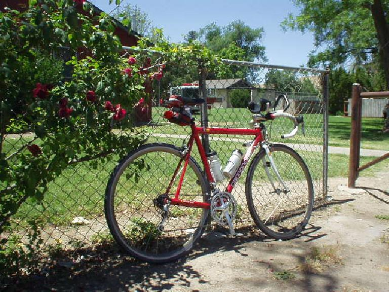 [Mile 56, 1:30 p.m.] My Cannondale and some roses at a park in Shandon.