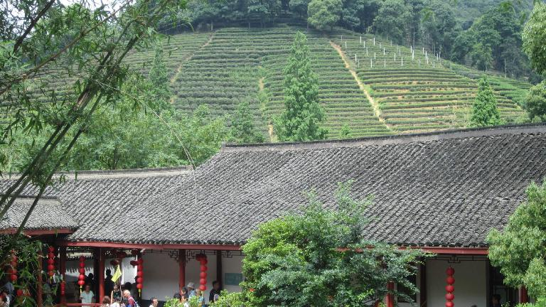 The Longjing tea plantation. (May 23, 2014)