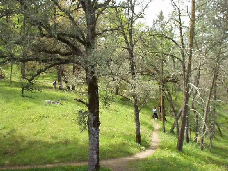 Thumbnail for Related: Henry Coe State Park, CA (2005)