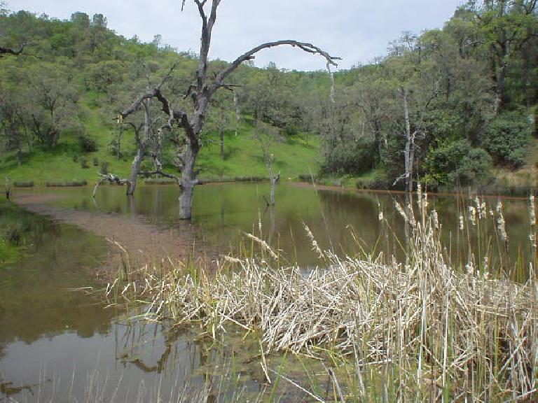 Small lake.
