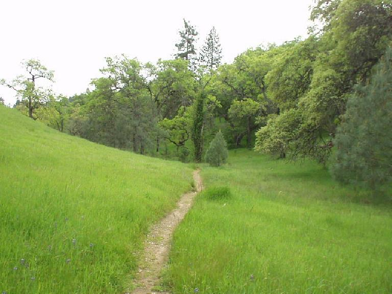 Due to the abundant California rains of February, March, and April, the park was very verdant!